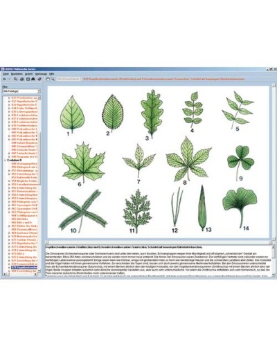 Botany in the Classroom, Interactive CD-ROM
