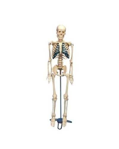 Desktop Skeleton