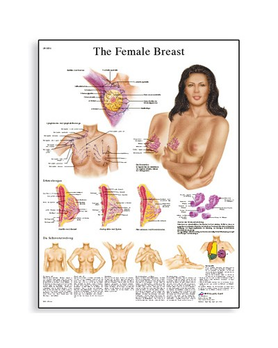 The Female Breast Chart - Anatomy, Pathology and Self-Examination